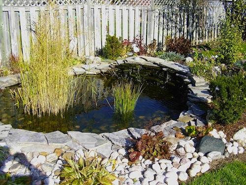 fish pond dating service